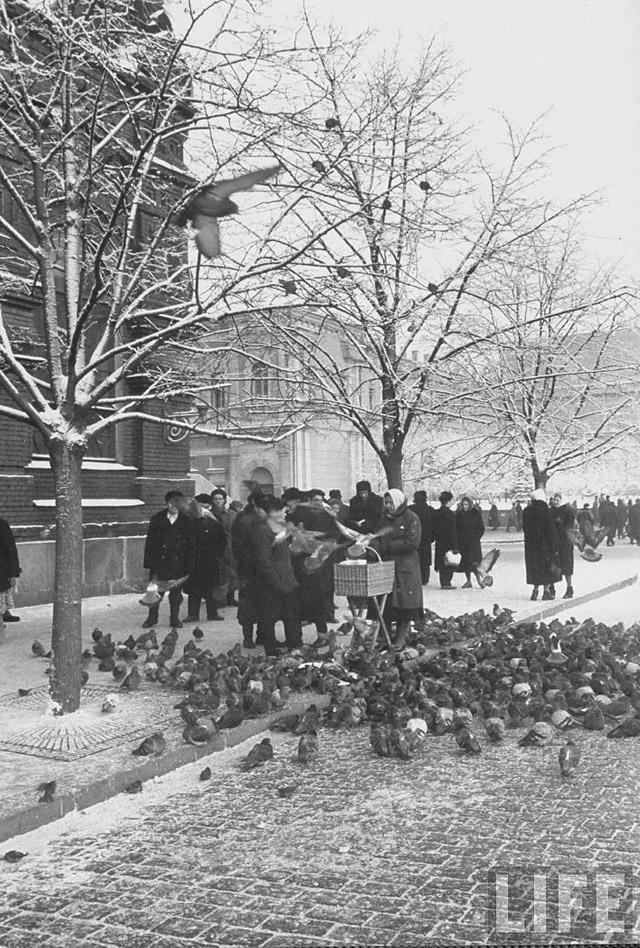 2. Голуби на улицах Москвы.