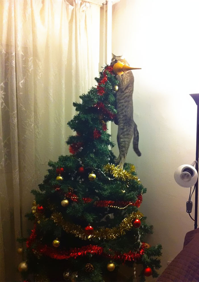 Котик принимает активное участие в украшении елки.