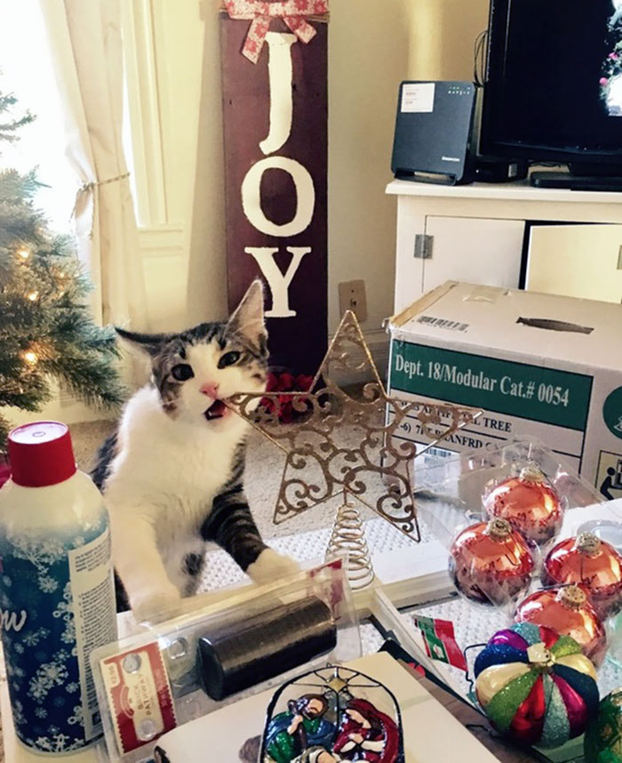 Попробуй Рождество на зуб.