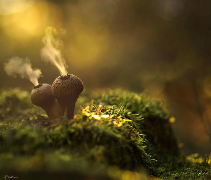 Мир грибов (28 фото)