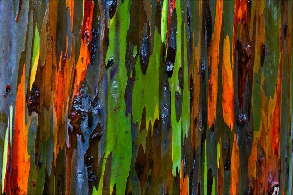 © huffingtonpost.com   Молния ввиде ворона наветке