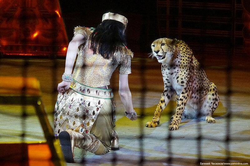 21. Цирк Костюк. гепарды. 31.10.16.06..jpg