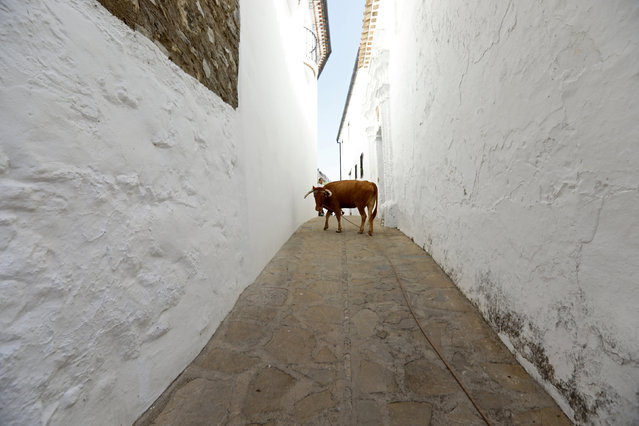 Life in Andalusia's Pueblos Blancos (13 pics)