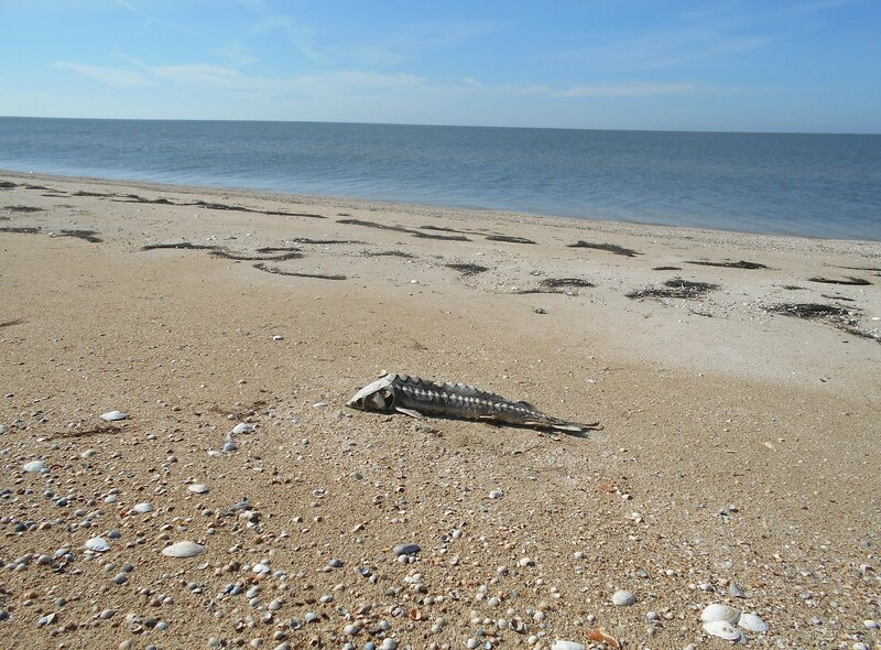 Берег, рыба на песке ... DSCN9607.JPG