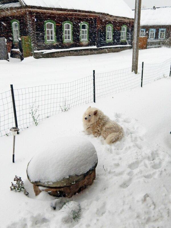 Дождалась снега !
