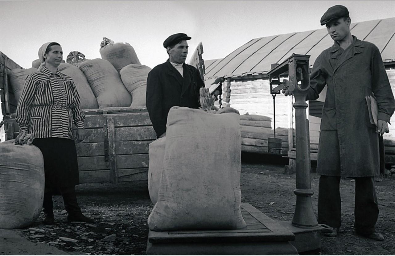 Колхоз «Красное Знамя». Выдача колхознику Н. М. Ваулину продуктов (1952)