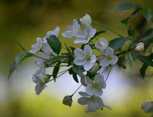 Весна… И хочется весь мир обнять… согреть теплом души…