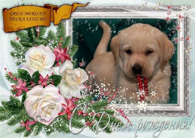 Прикольная открытка с днем рождения сестре с собакой, руси