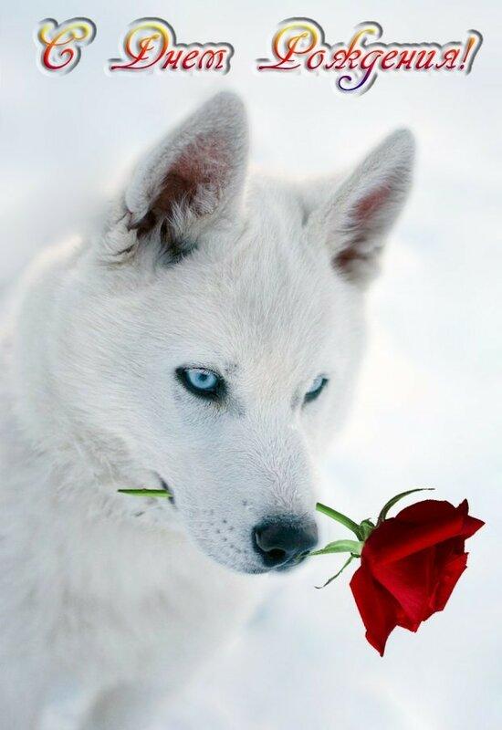 Волчонок с днем рождения картинки