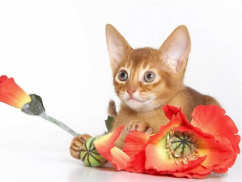 Картинки кот с цветком в зубах, буду