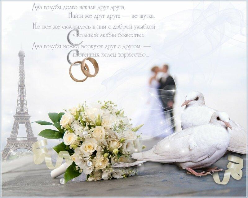 аквариума поздравление с днем свадьбы екатерины и дмитрия творческую
