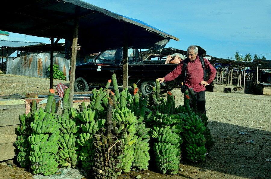 Бананы Город Соронг на Западном Папуа в Индонезии Город Соронг на Западном Папуа в Индонезии 0 1b0fcb 8ab212cc XXL