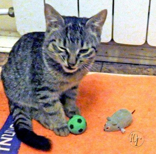 Котёнок с мячом и без