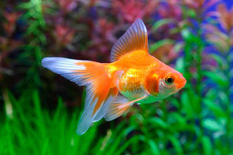 Притча о золотой рыбке (1 фото)