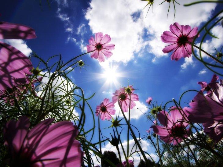 Сила цветов (27 фото)