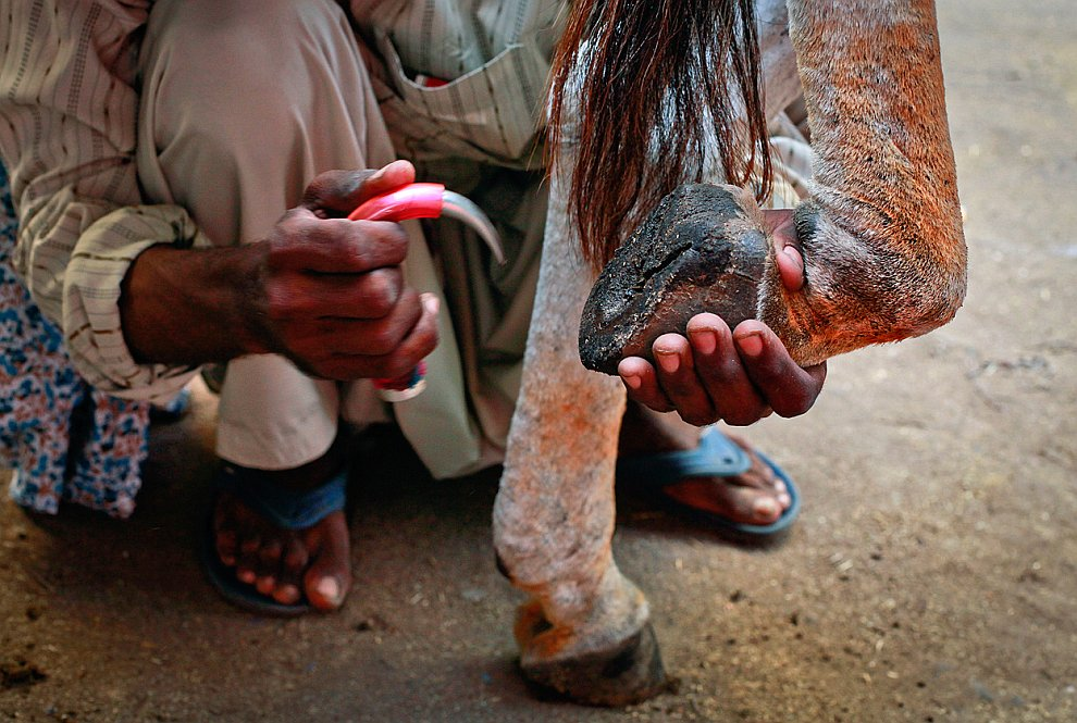 Пакистан сцены из жизни Фотография