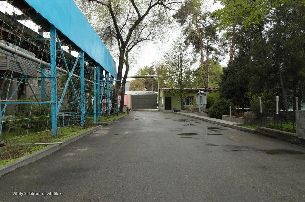 Декоративный виноградник и двор Бахус, завод в Алматы