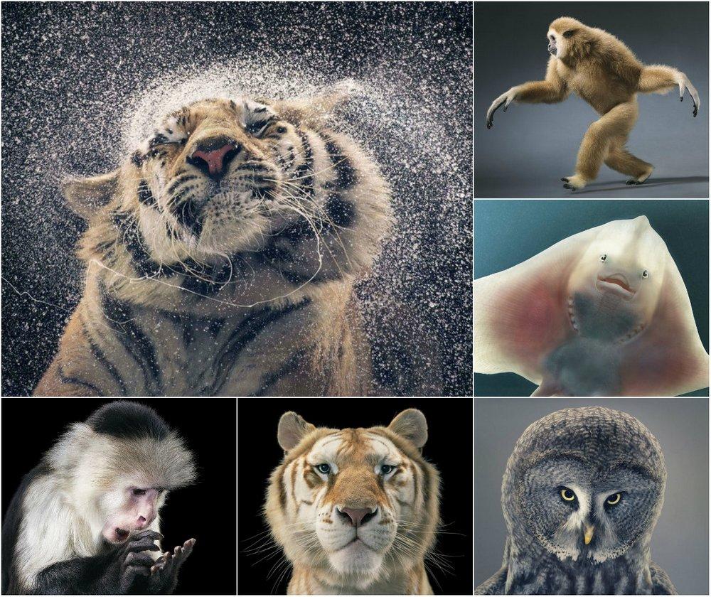 Удивительные портреты животных Тима Флэка
