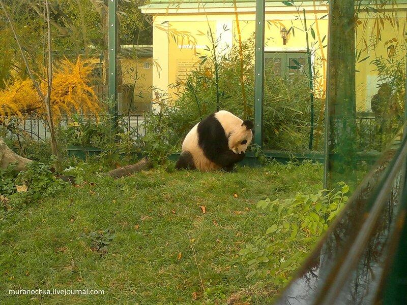 Золотая осень в Венском зоопарке  -