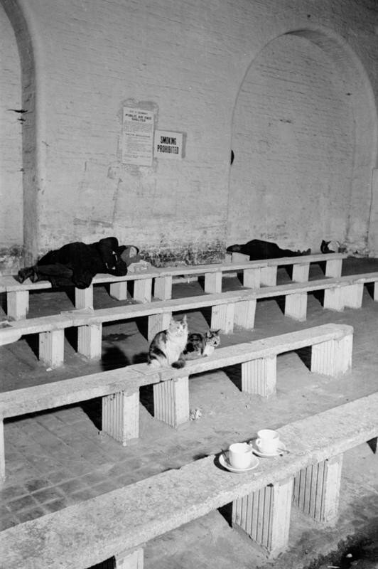 Two cats, two teacups and a sleeping man take residence on benches under railway arches which are used as a public air raid shelter for dispossessed people in west London, 1940.