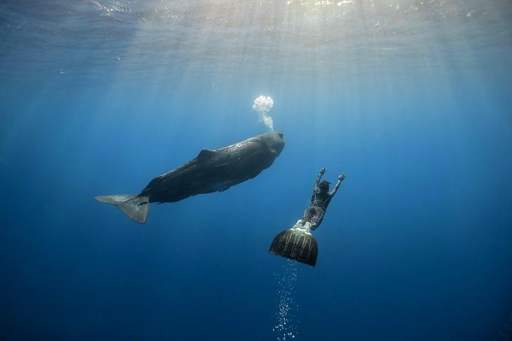 3. С китом у острова Майотта.