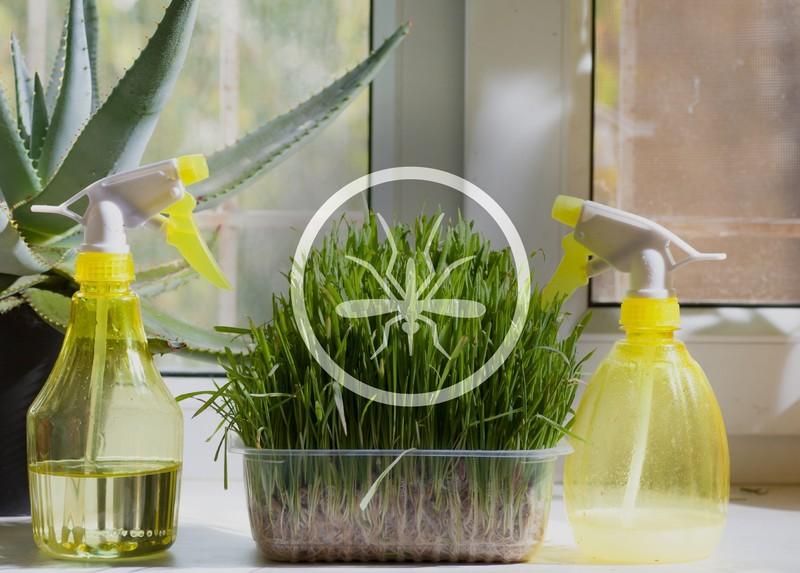 Травы, которые помогут избавиться от комаров