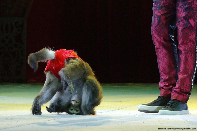 Цирк Никулина. Магия цирка. 21.02.17.19. Джабраилов..jpg