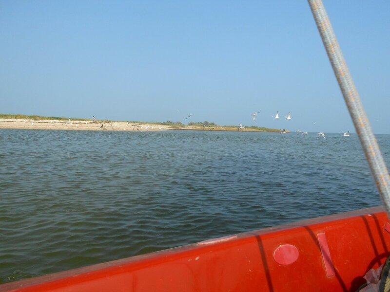 Морские птицы, берег пролива ... DSCN7500.JPG