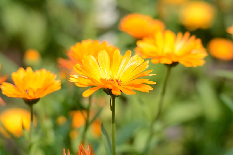 цветочное 24 16.jpg