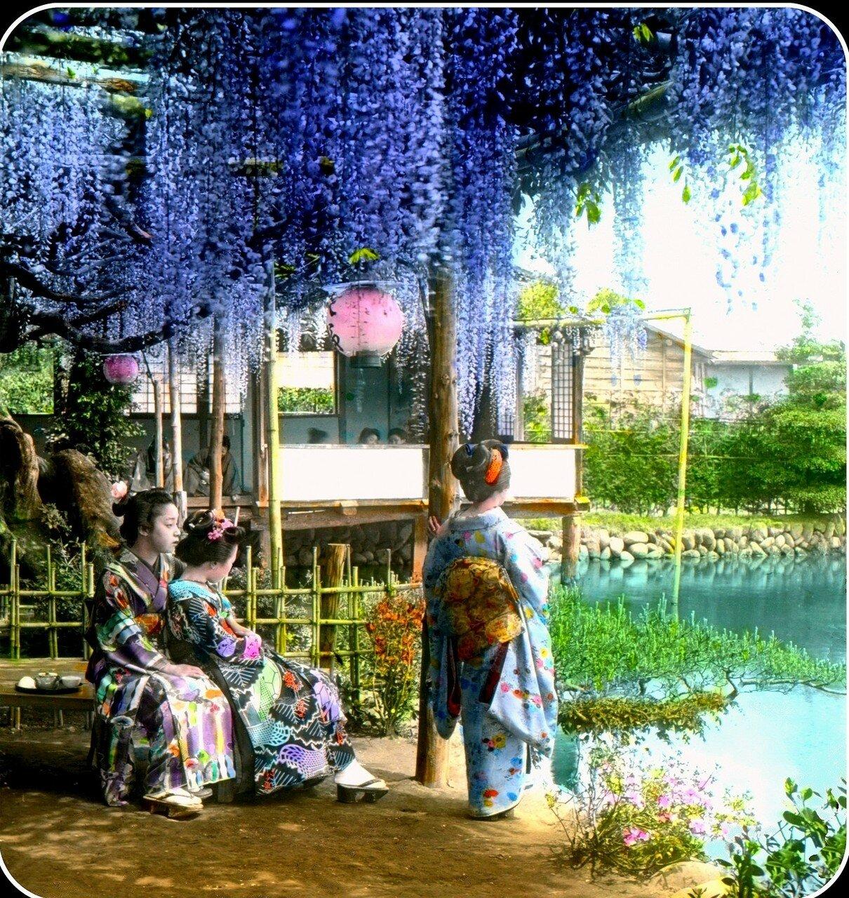 Девушки в саду глициний