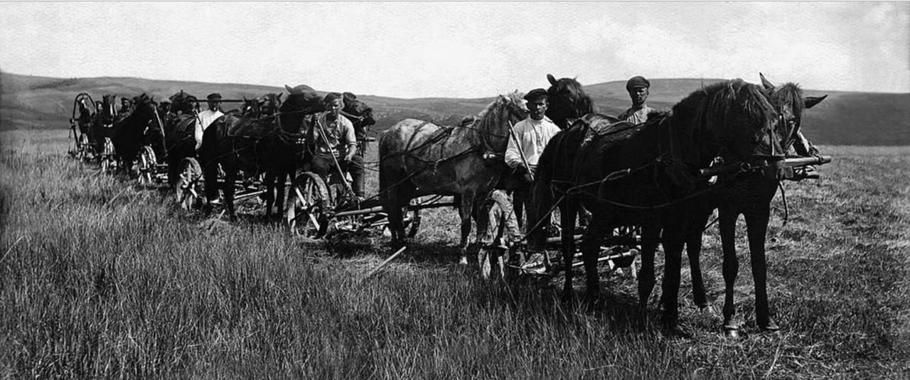 Магнитогорский совхоз. Бригада на сенокосе. 1930.