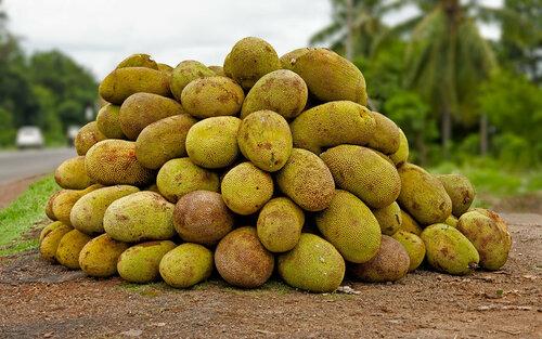 Jackfruit-kerala - ��������