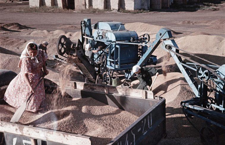 Сбор урожая пшеницы на ферме, Украина.