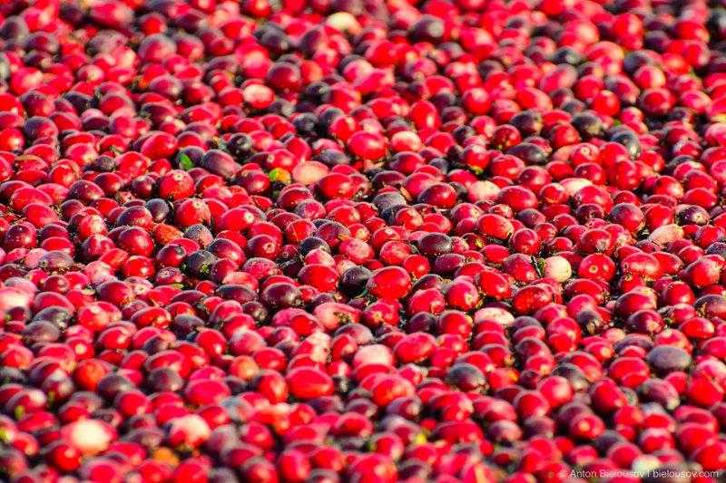 Вообще, это — одна из самых питательных ягод, богатая витамином С, калием и железом, органически