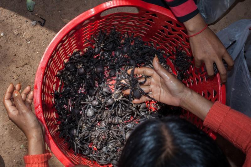 Охота на тарантулов в Камбодже (10 фото)