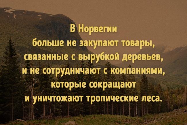 © anotherescape.com  © regnskog.no