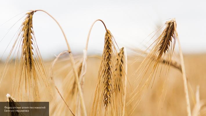 РФ будет поставлять пшеницу вВенесуэлу