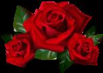 rose-1.png