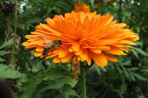 На золотом цветке