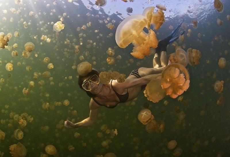 Удивительный мир медуз