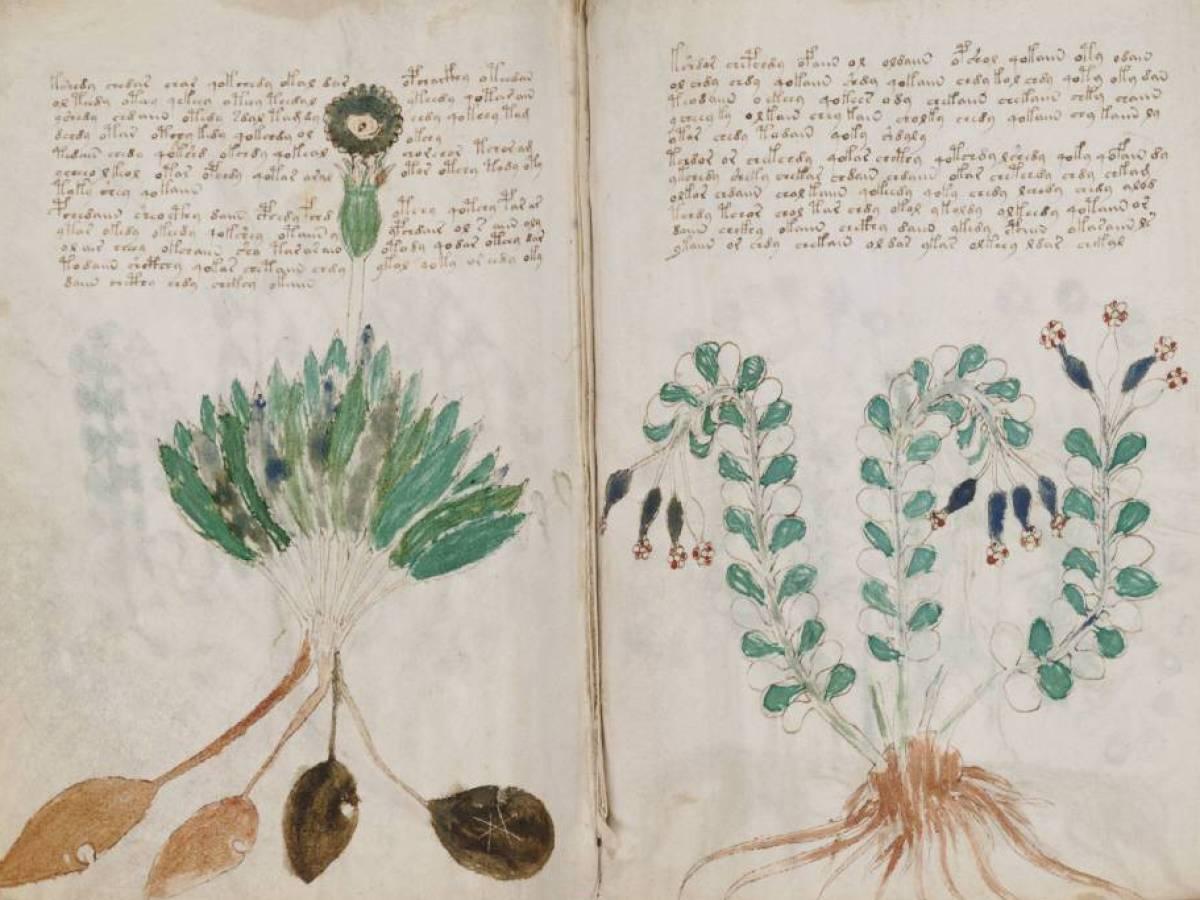 Рукопись Войнича Рукопись Войнича, созданная в XV веке, — одна из самых знаменитых загадок эпохи Воз