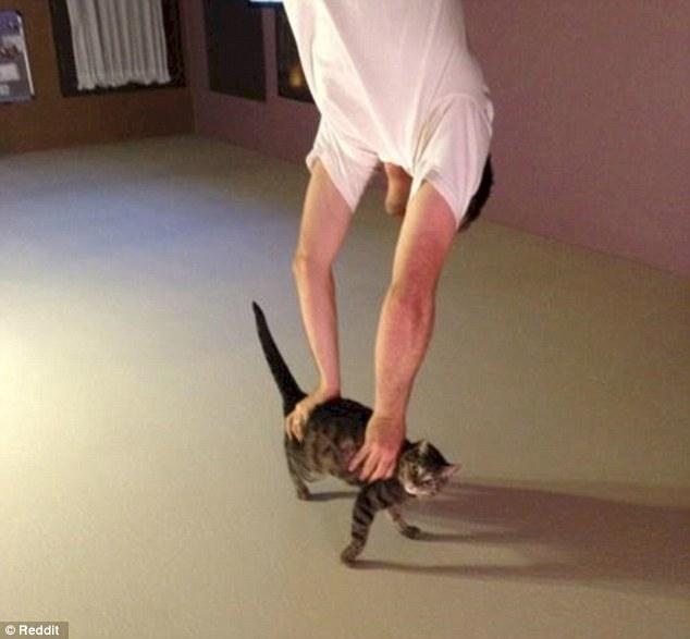 Фотография перевернута — мужчина пытается снять котика с потолка.