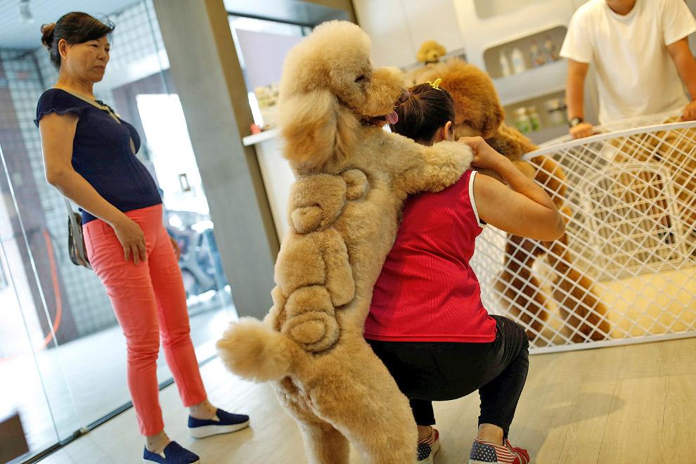3. Рождение шедевра. Слева — еще один шедевр в виде льва на спине. Тайвань 19 июня 2016. (Фото