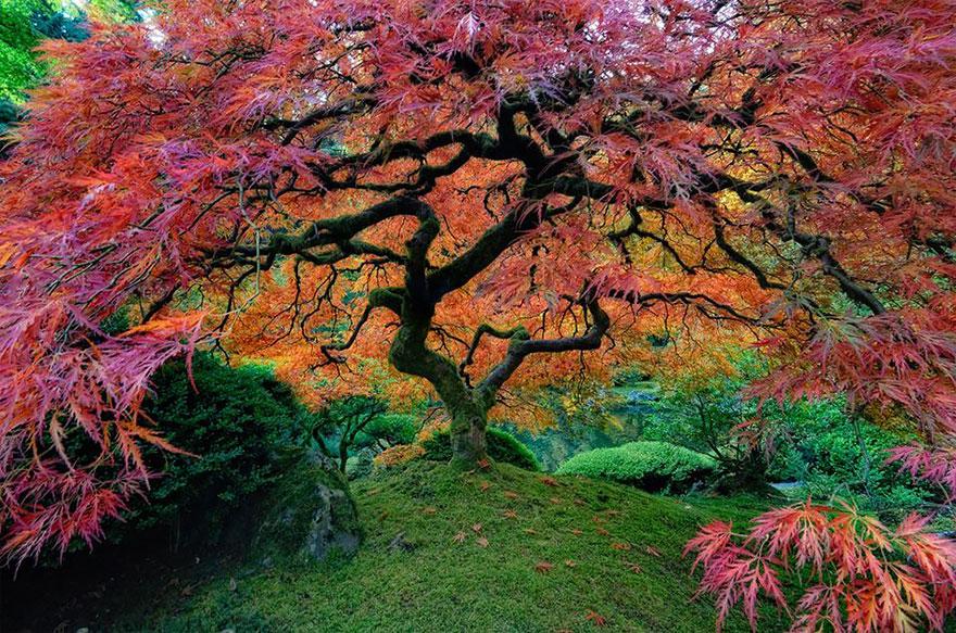 1. 125-летний рододендрон в Канаде 2. Незащищенные от ветра деревья в Новой Зеландии 3. Японский кле