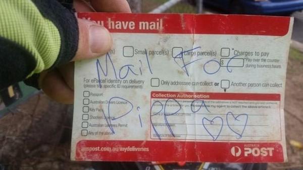 Собака которая любит получать почту