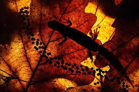 Открытки Всемирный день дикой природы. Ящерка на листке открытки фото рисунки картинки поздравления