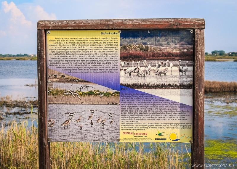 Разнообразные виды птиц облюбовали берега