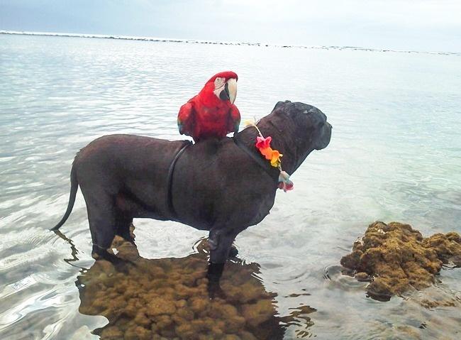 фотографии животных Фотография животные фотограф желание сделай сам интересное почему