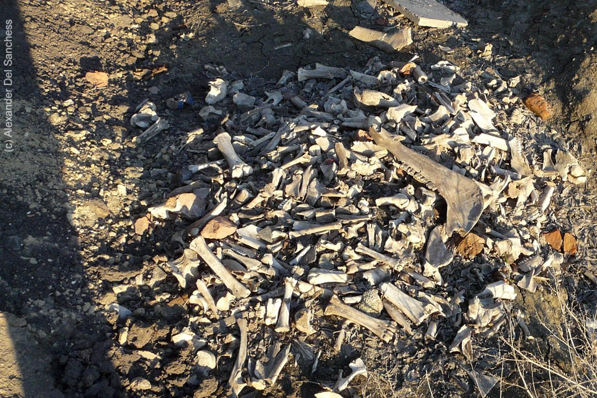 кости животных из мусорной ямы.jpg