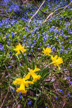 depositphotos_27910175-stock-photo-spring-wildflowers.jpg
